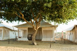 Our comfortable tent in the Thar desert. A cobra was free of charge....