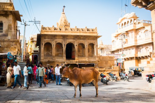 Cow peacefully standing on the Main square of Jaisalmer Fort, India