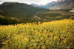 Summer vegetation in NP Los Glaciares
