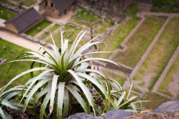 Tillandsia growing on the steep walls