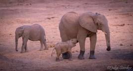 Littl baby elephant having her dinner