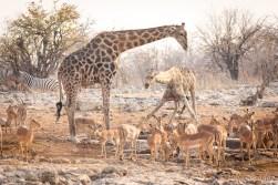 Animals gathering at the waterhole