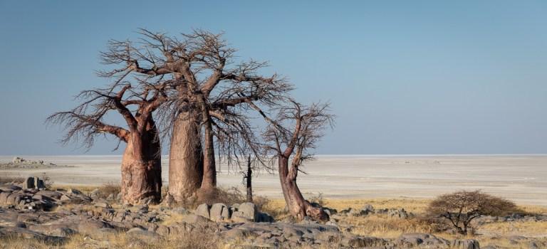 A glimpse of eternity: Kubu Island, Botswana