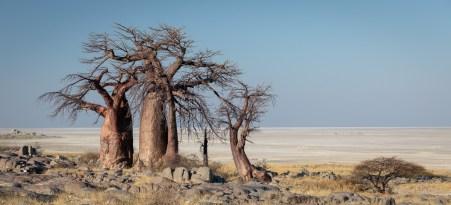 Kubu Island - Botswana