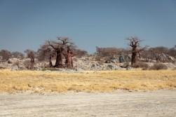 Baobabs on Kubu Island, Botswana