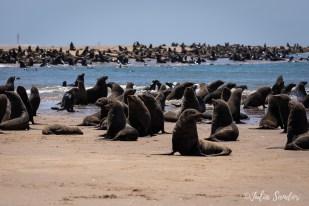 Pelican Point -Walvis Bay