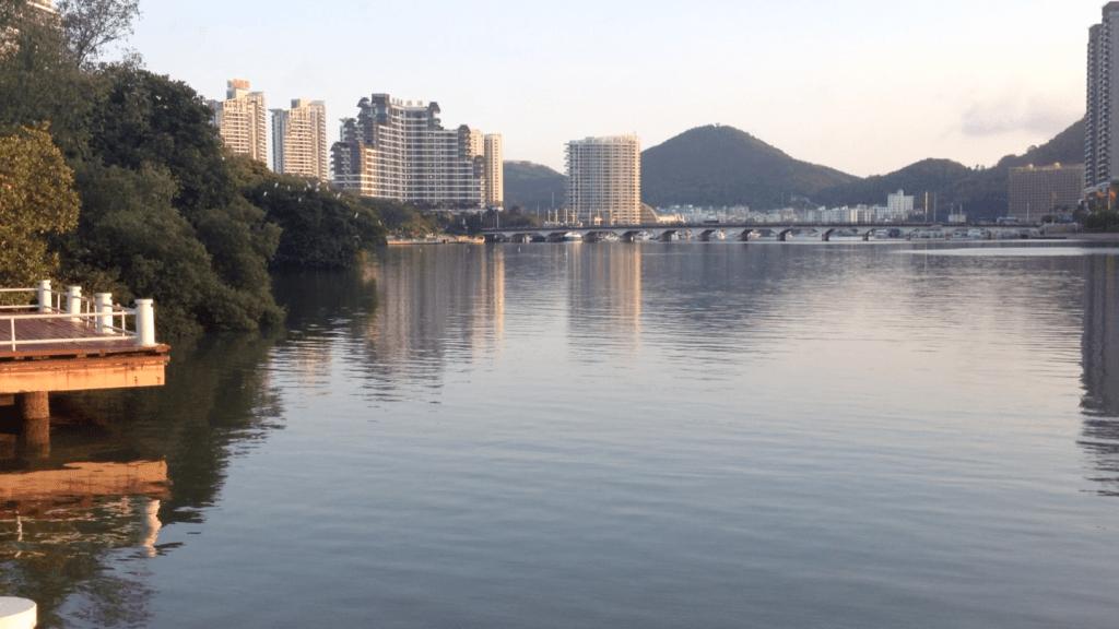 Urban mangrove in China