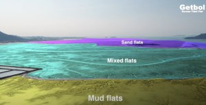 Getbol from video by World Heritage Promotion Team of Korean Tidal Flat