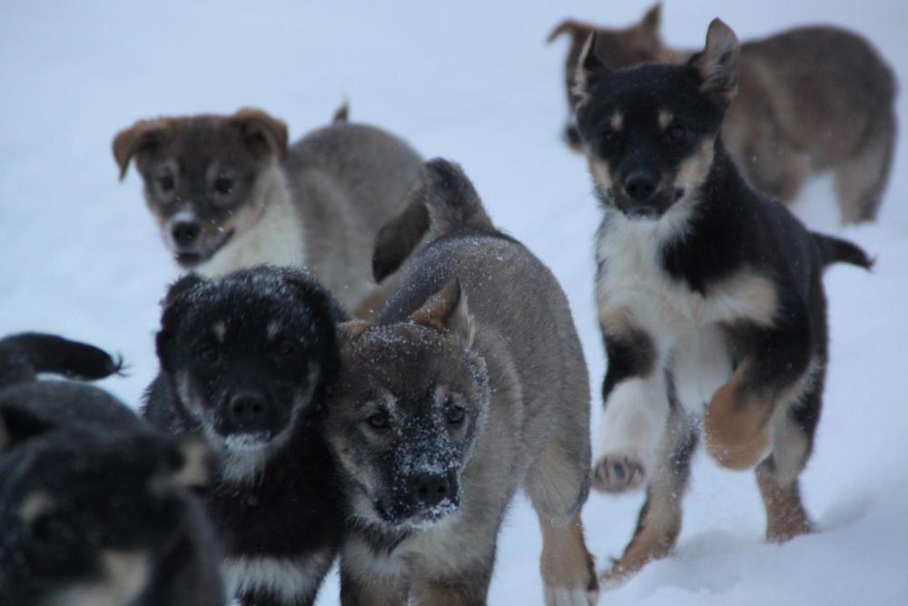 T-Puppies - Week 14 (3/3)
