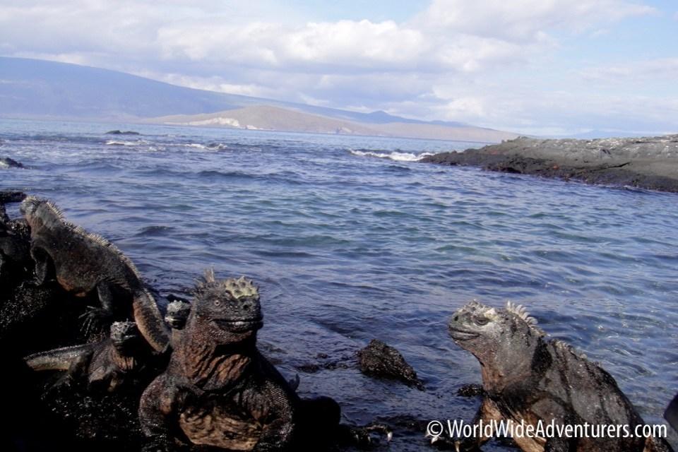 Galapagos Islands 24