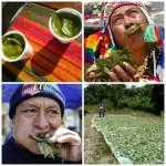 Coca Tea – Culture in a Cup