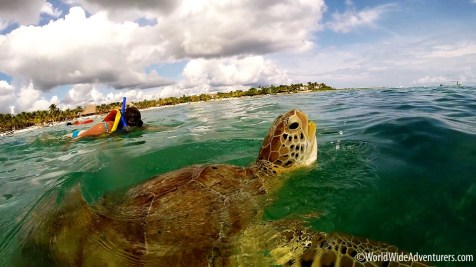 swimming-with-turtles-at-akumal-beach-mexico