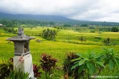 Living in Bali131