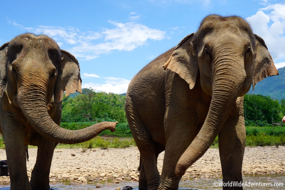 MandaLao Elephant Sanctuary in Luang Prabang, Laos