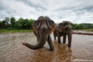 MandaLao Elephant Sanctuary - Luang Prabang, Laos88