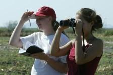 birding at palo verde