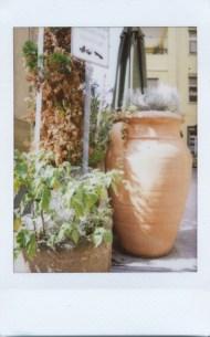 Title: green city, Name: Sofia Suerguen, Fujifilm instax mini 7s