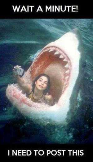 Funniest Pictures Ever Gallery