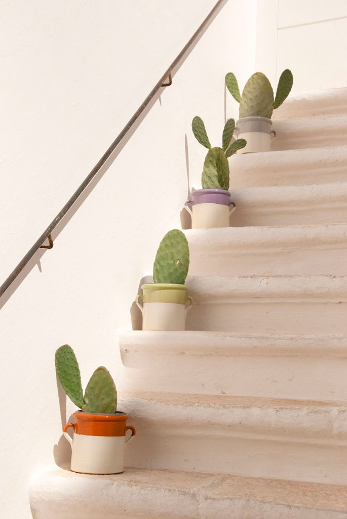 Kaktusy na schodach