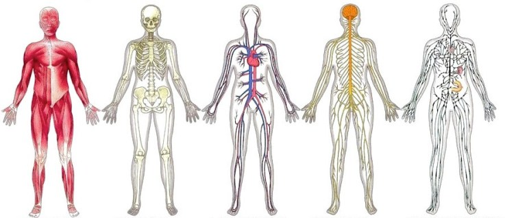 body-systems