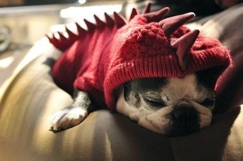 Pug Puppy In Dinosaur Sweater