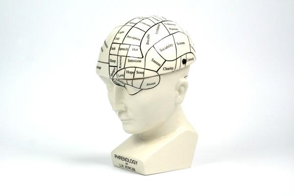 Phrenology Head Hinged Case