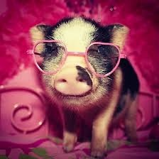 Pig With Pink Glasses
