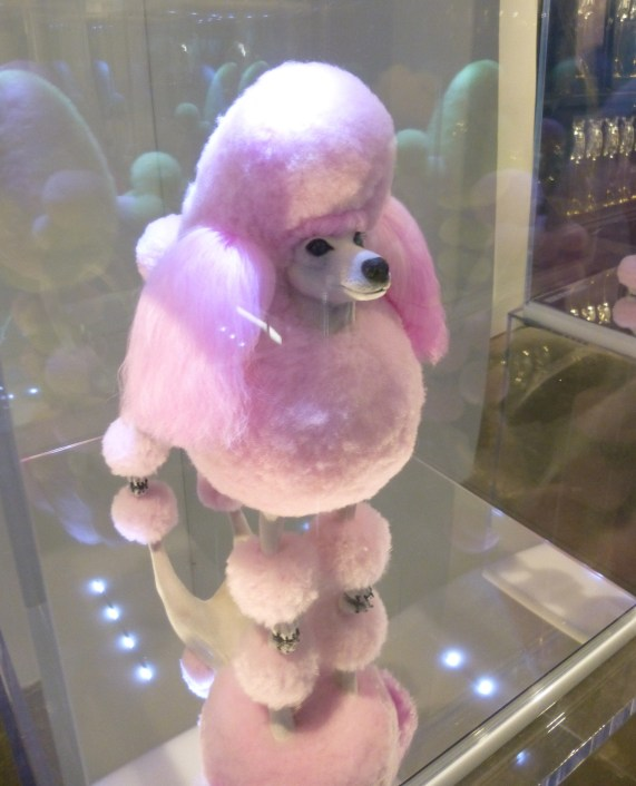 Desire Obtain Cherish Pink Poodle