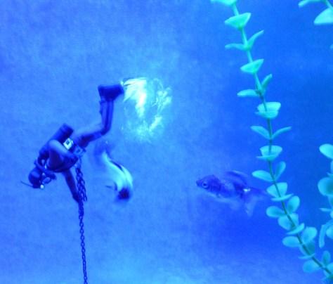 Venus De Milo Aquarium Detail
