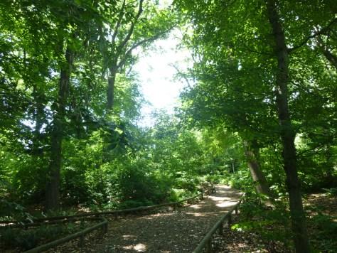 Native Flora Garden Path