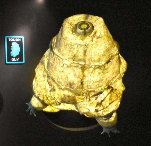 Tardigrade Model Photo