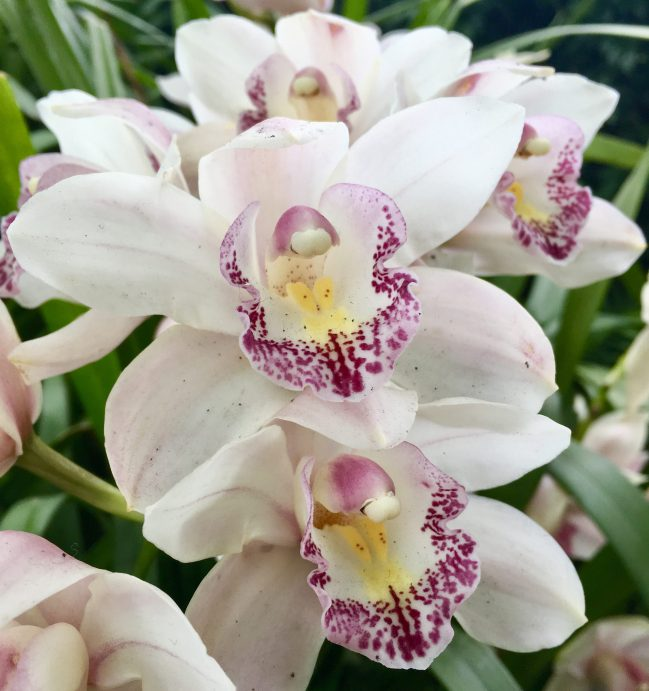 White with Purple Orchids