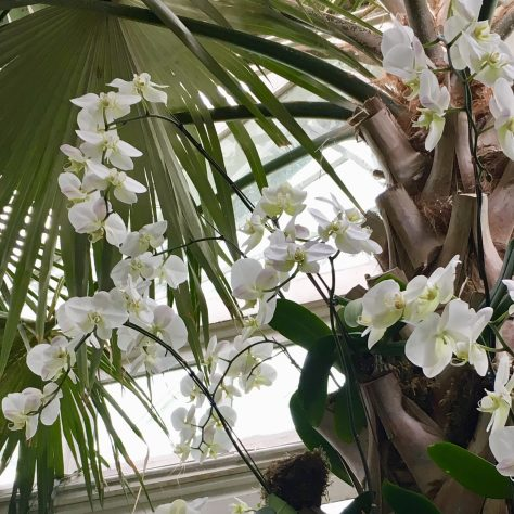 Cascading White Orchids