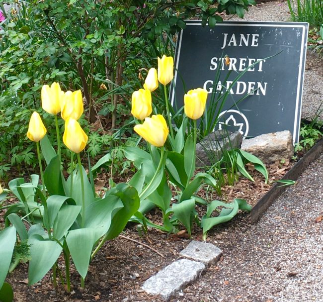 jane street garden photo by gail