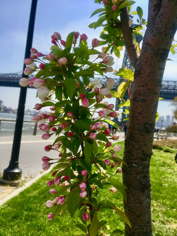 east river park photo by gail worley