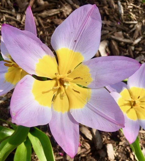 purple and yellow flower photo by gail worley