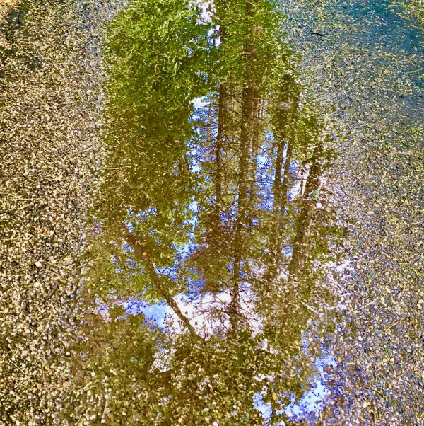 forest reflection photo by gail worley