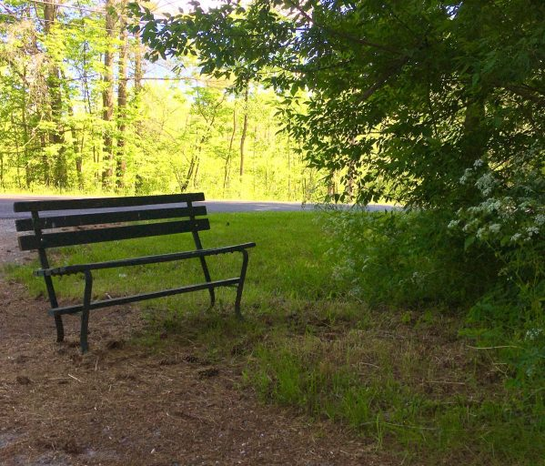 bench on the woods photo by gail