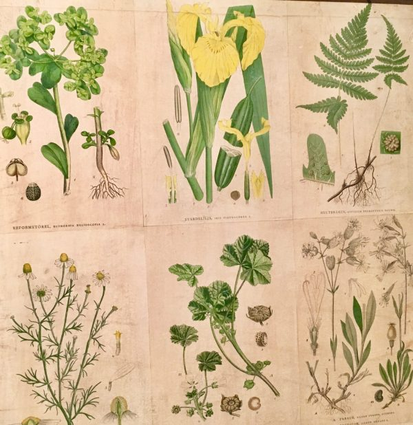 flora cabinet print detail photo by gail worley