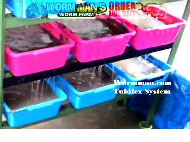Tubifex Worm Culturing and Breeding Setup |