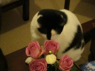 Cat with flowers by Ana Gobledale
