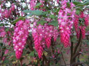 Garden flowers, Salisbury UK - Ana Gobledale