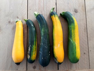 Thaise courgettesoep grote courgettes uit moestuin
