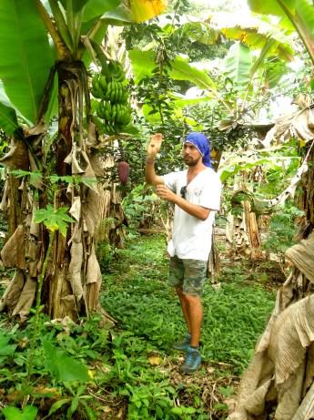 Ricardo erzählt uns was zur Bananenstaude