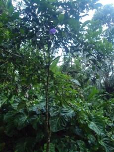Viel grün und zarte Blüten am Wegesrand