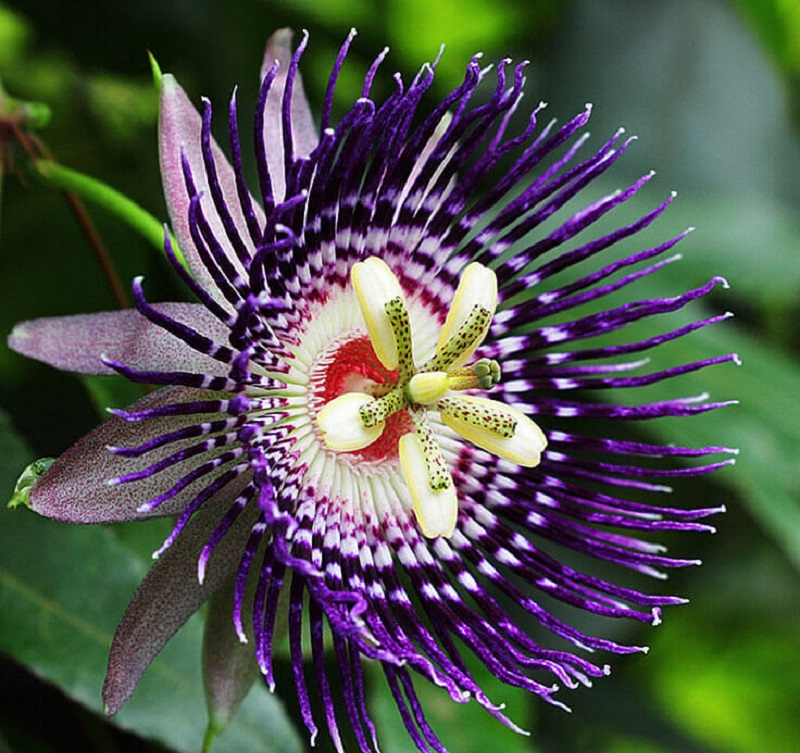 87 most beautiful purple flowers in the world top 12 for What is the most beautiful flower on earth