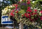 Hanging basket at Oakworth.