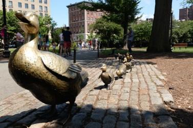 Ducks on Boston Common