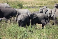 Elephants in the Wild: a guilt-free way of experiencing their awesomeness.