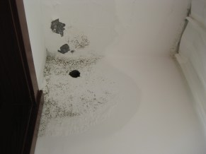 Our Roommates: a leak in our bedroom ceiling and mold on it and the walls. BTW, the big hole in the wall has been there since we moved in. What's it for? We have no clue.
